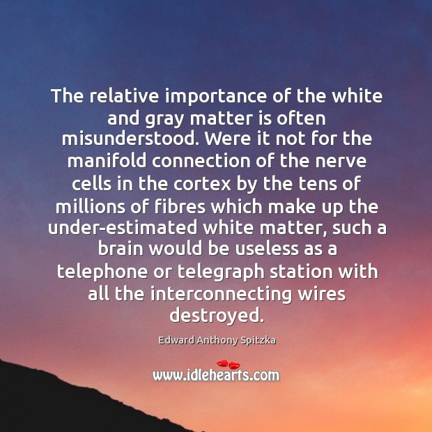 The relative importance of the white and gray matter is often misunderstood. Image