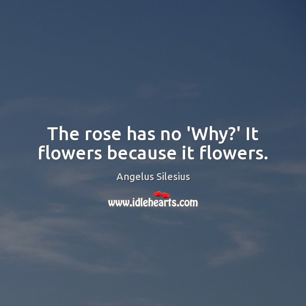 Image, The rose has no 'Why?' It flowers because it flowers.