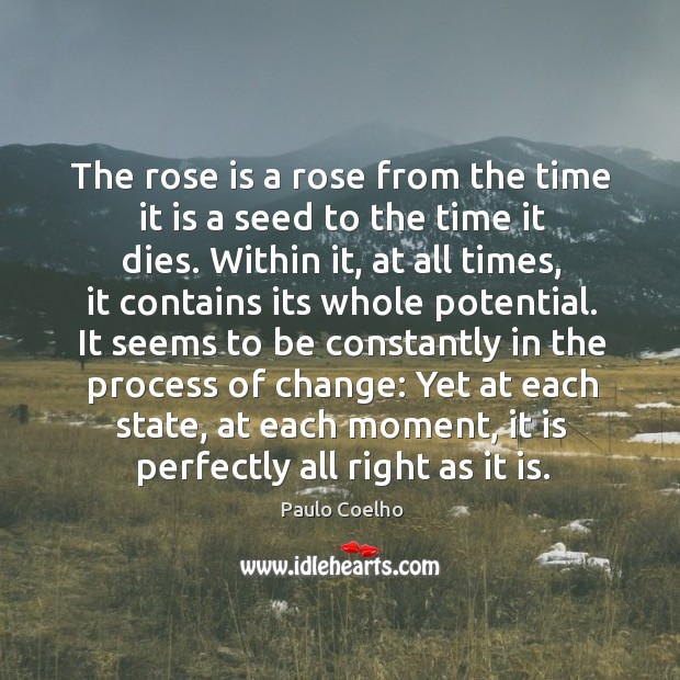 The rose is a rose from the time it is a seed Image