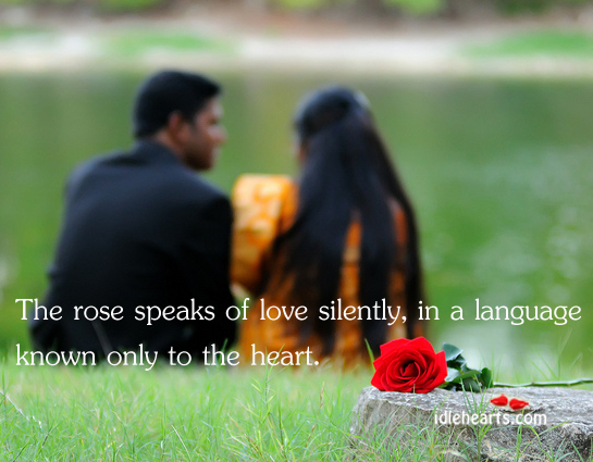 The Rose Speaks Of Love Silently, In A Language Known Only…