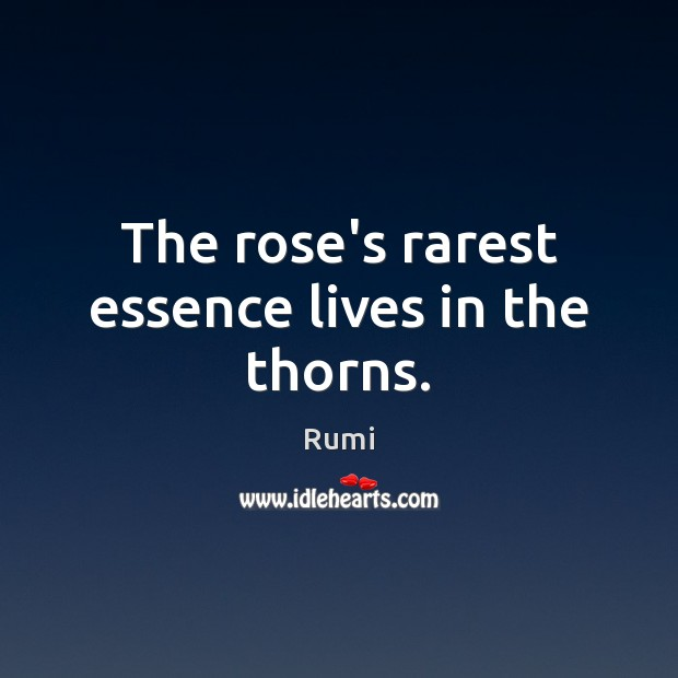 Image, The rose's rarest essence lives in the thorns.