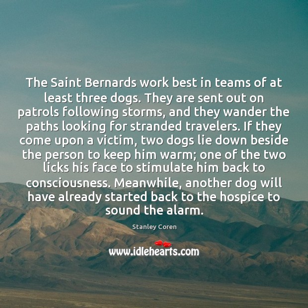 The Saint Bernards work best in teams of at least three dogs. Image