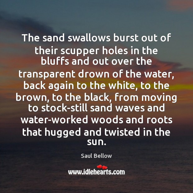 The sand swallows burst out of their scupper holes in the bluffs Saul Bellow Picture Quote