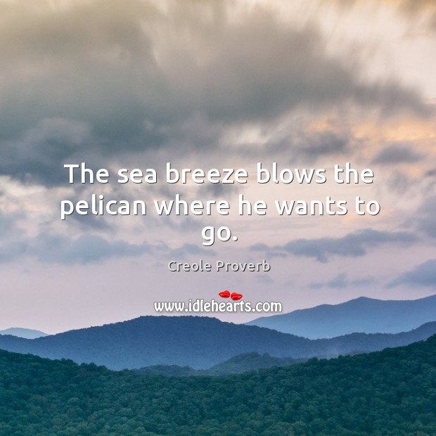 Image, The sea breeze blows the pelican where he wants to go.