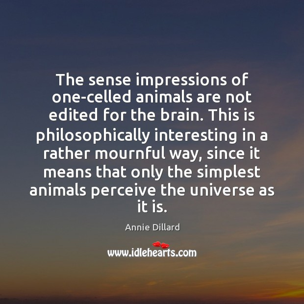 The sense impressions of one-celled animals are not edited for the brain. Image