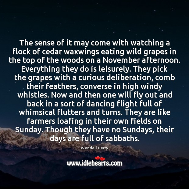 The sense of it may come with watching a flock of cedar Wendell Berry Picture Quote