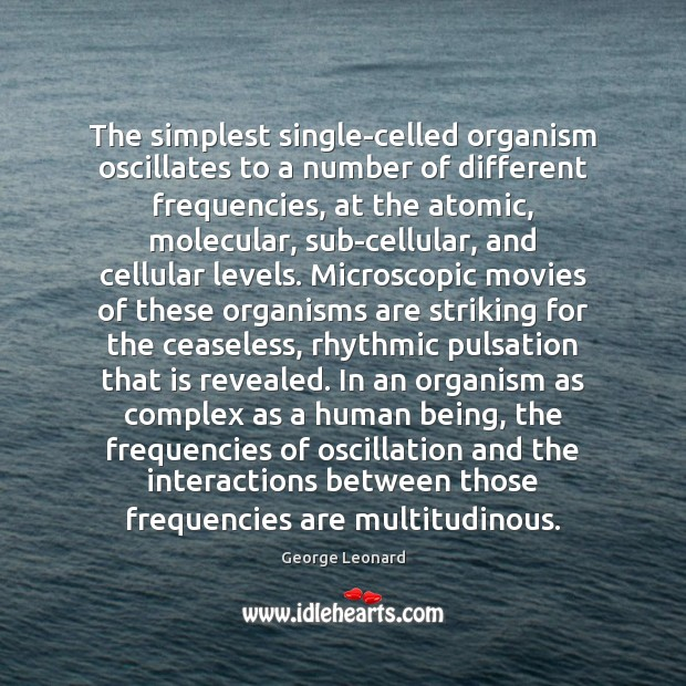 The simplest single-celled organism oscillates to a number of different frequencies, at Image