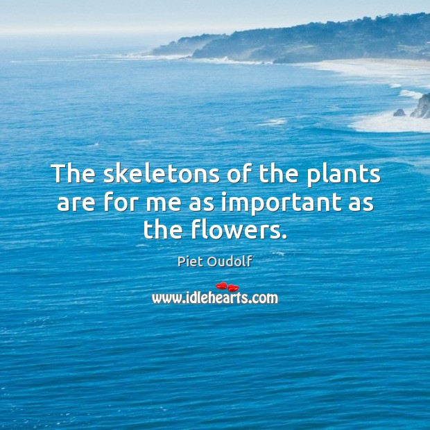 The skeletons of the plants are for me as important as the flowers. Image
