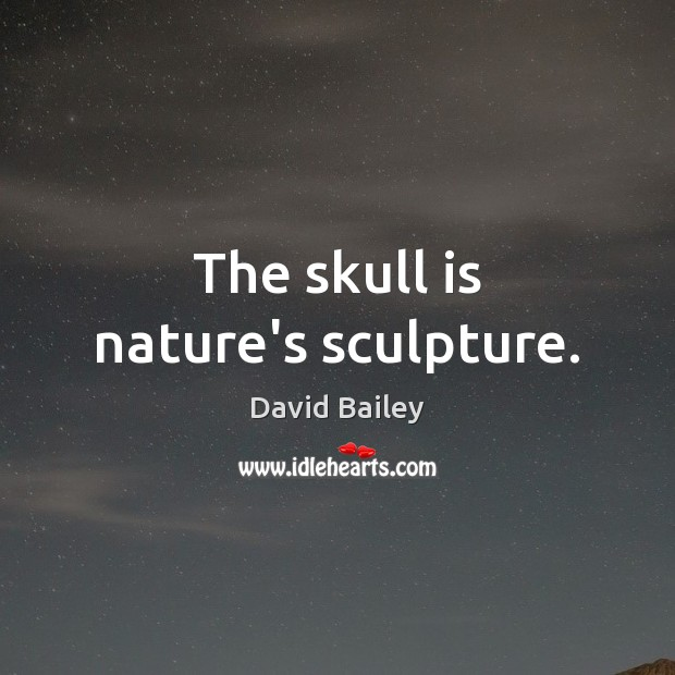 The skull is nature's sculpture. Image