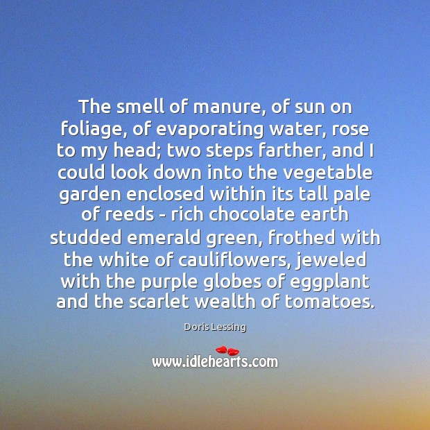 The smell of manure, of sun on foliage, of evaporating water, rose Doris Lessing Picture Quote