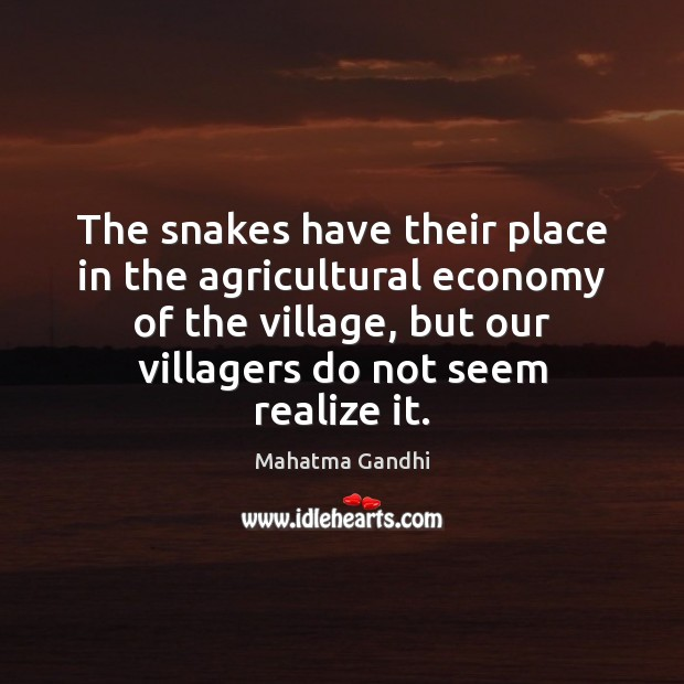 The snakes have their place in the agricultural economy of the village, Image