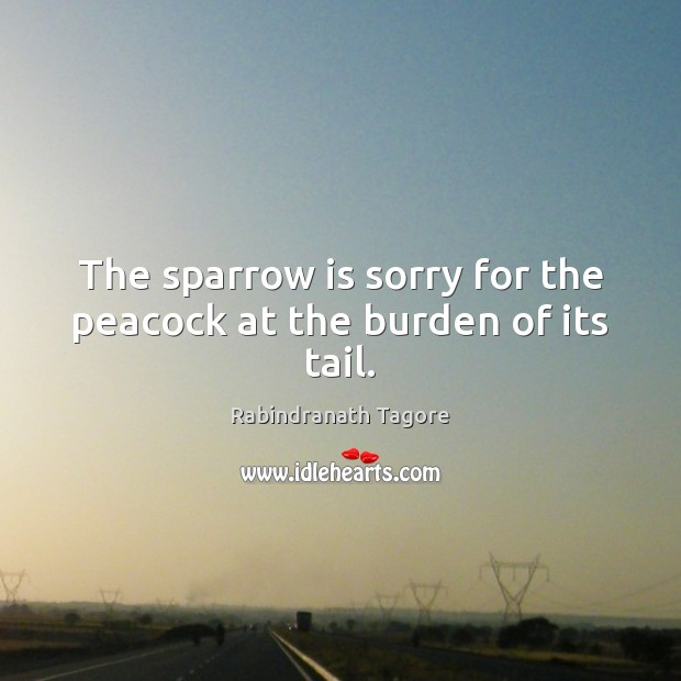 Image, The sparrow is sorry for the peacock at the burden of its tail.