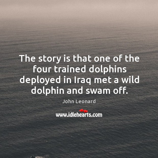 Image, The story is that one of the four trained dolphins deployed in iraq met a wild dolphin and swam off.