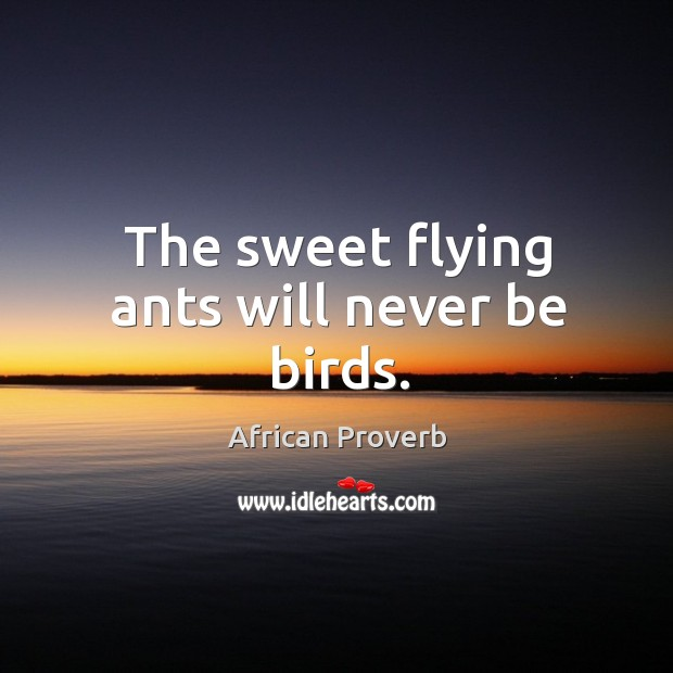 Image, The sweet flying ants will never be birds.