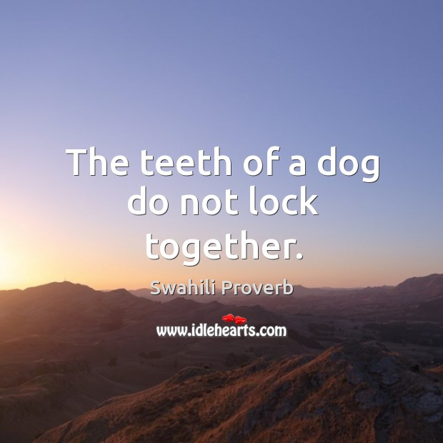 Image, The teeth of a dog do not lock together.