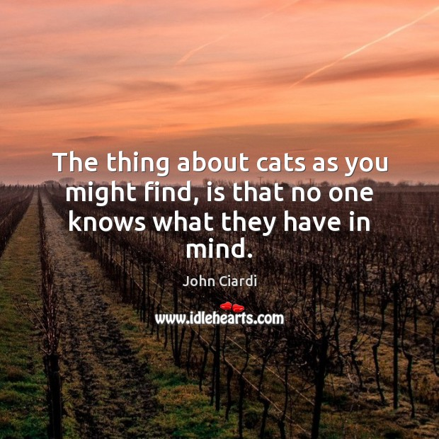 The thing about cats as you might find, is that no one knows what they have in mind. Image