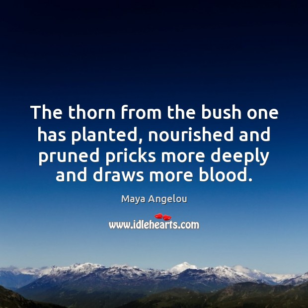 Image, The thorn from the bush one has planted, nourished and pruned pricks