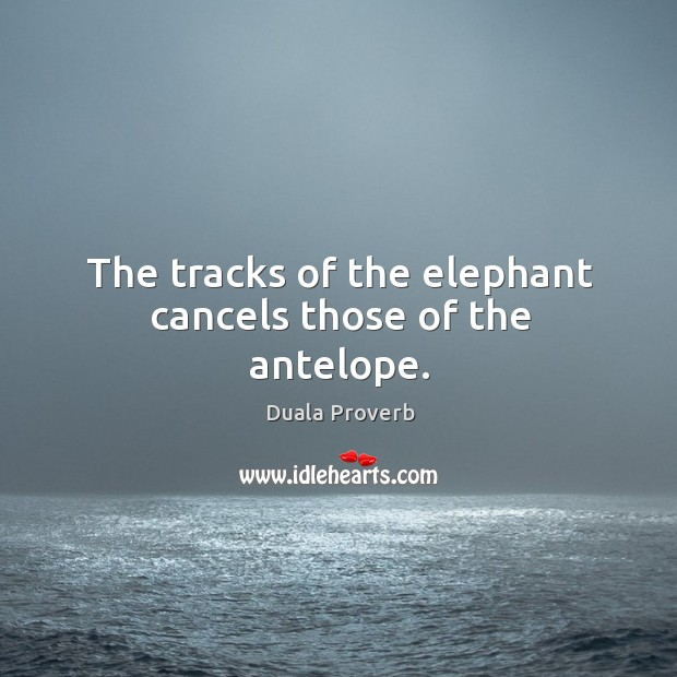 The tracks of the elephant cancels those of the antelope. Duala Proverbs Image