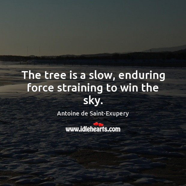 The tree is a slow, enduring force straining to win the sky. Image