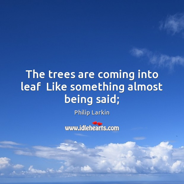The trees are coming into leaf  Like something almost being said; Image
