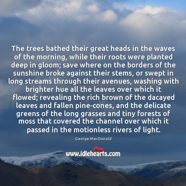 Image, The trees bathed their great heads in the waves of the morning,