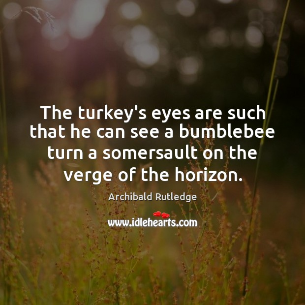 Image, The turkey's eyes are such that he can see a bumblebee turn