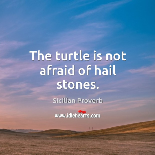 Image, The turtle is not afraid of hail stones.