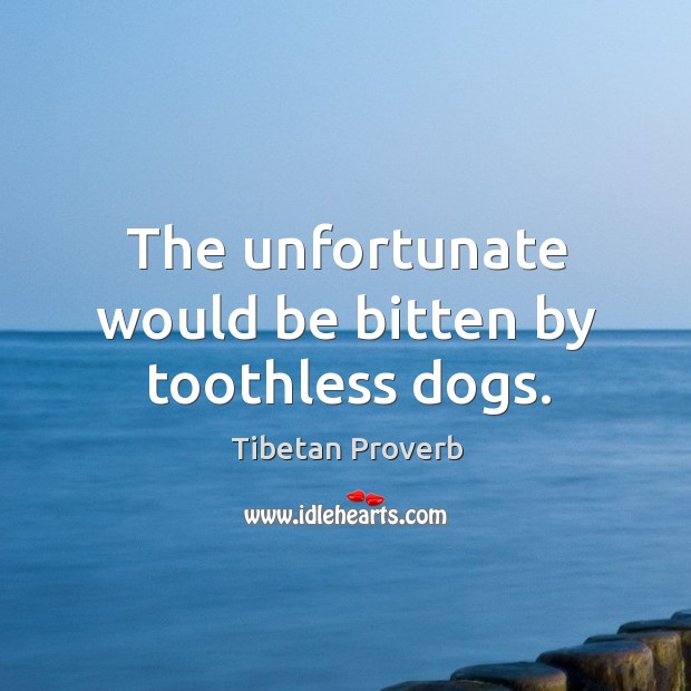 The unfortunate would be bitten by toothless dogs. Tibetan Proverbs Image