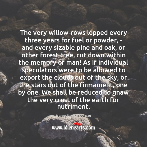 Image, The very willow-rows lopped every three years for fuel or powder, –
