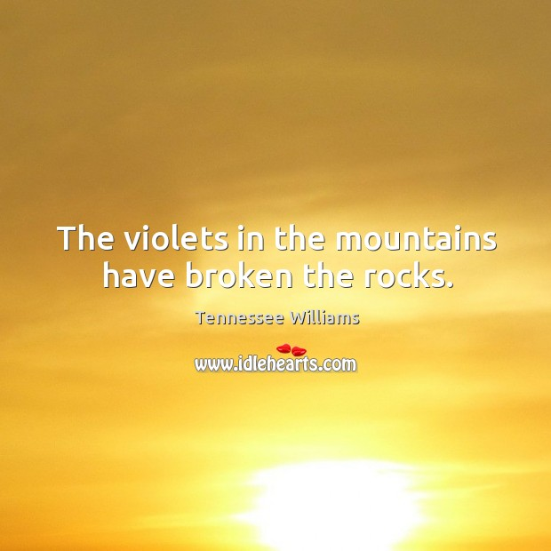 The violets in the mountains have broken the rocks. Image