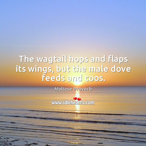 Image, The wagtail hops and flaps its wings, but the male dove feeds and coos.