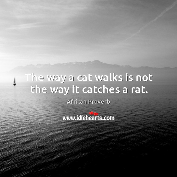 Image, The way a cat walks is not the way it catches a rat.