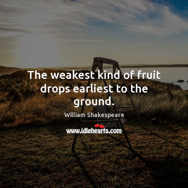 The weakest kind of fruit drops earliest to the ground. Image