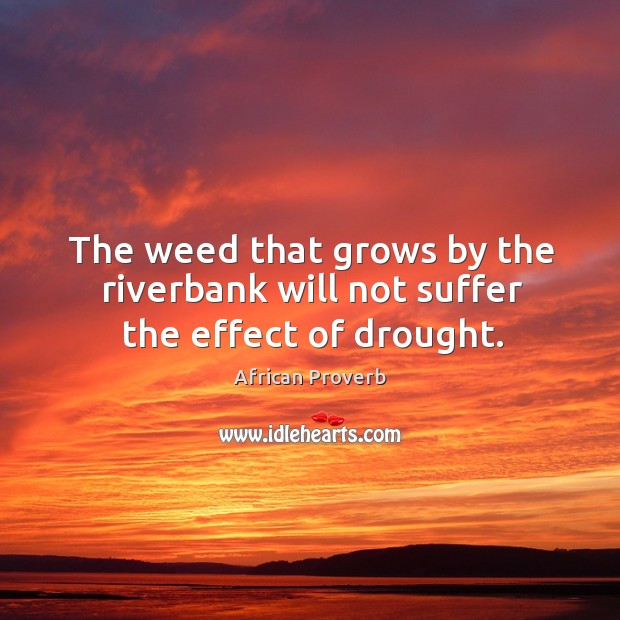 Image, The weed that grows by the riverbank will not suffer the effect of drought.