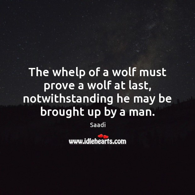 The whelp of a wolf must prove a wolf at last, notwithstanding Saadi Picture Quote