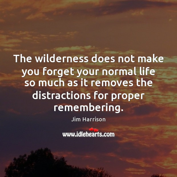 The wilderness does not make you forget your normal life so much Jim Harrison Picture Quote