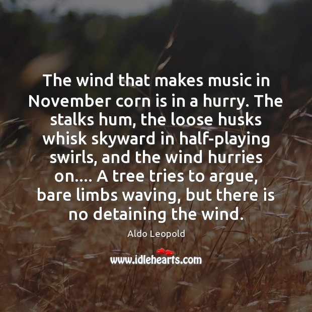 Image, The wind that makes music in November corn is in a hurry.