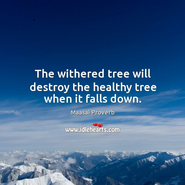 The withered tree will destroy the healthy tree when it falls down. Maasai Proverbs Image