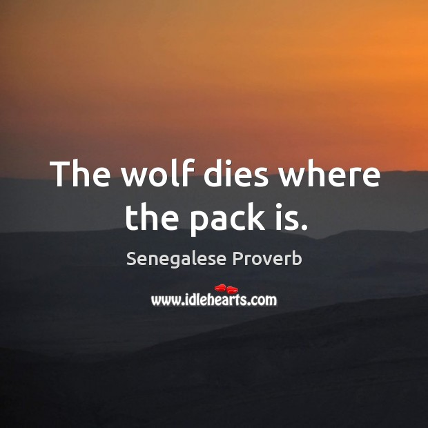 The wolf dies where the pack is. Senegalese Proverbs Image
