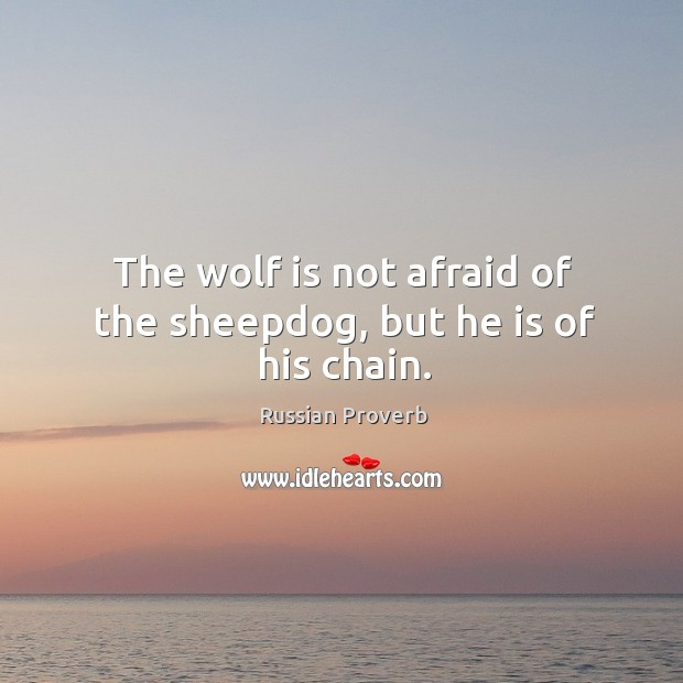 Image, The wolf is not afraid of the sheepdog, but he is of his chain.