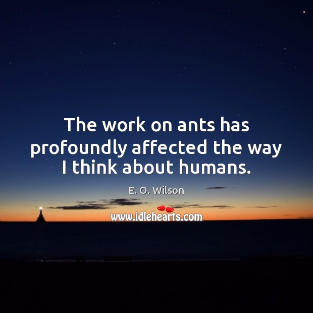 Image, The work on ants has profoundly affected the way I think about humans.