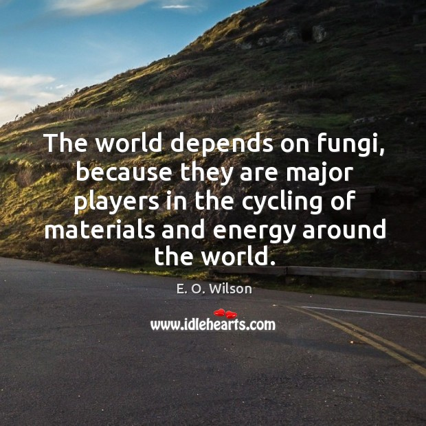 Image, The world depends on fungi, because they are major players in the