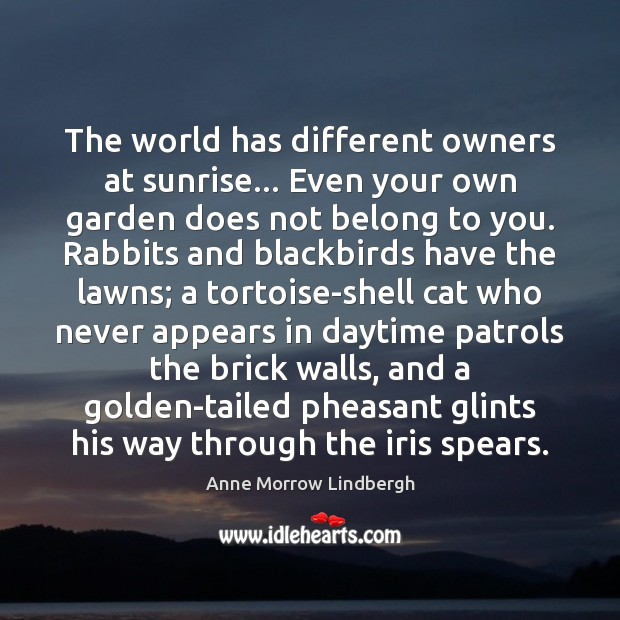 Image, The world has different owners at sunrise… Even your own garden does