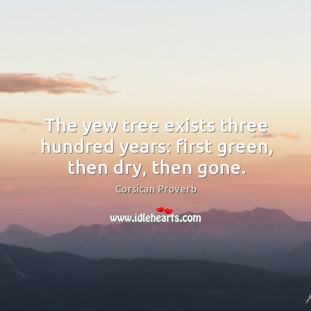 Image, The yew tree exists three hundred years: first green, then dry, then gone.