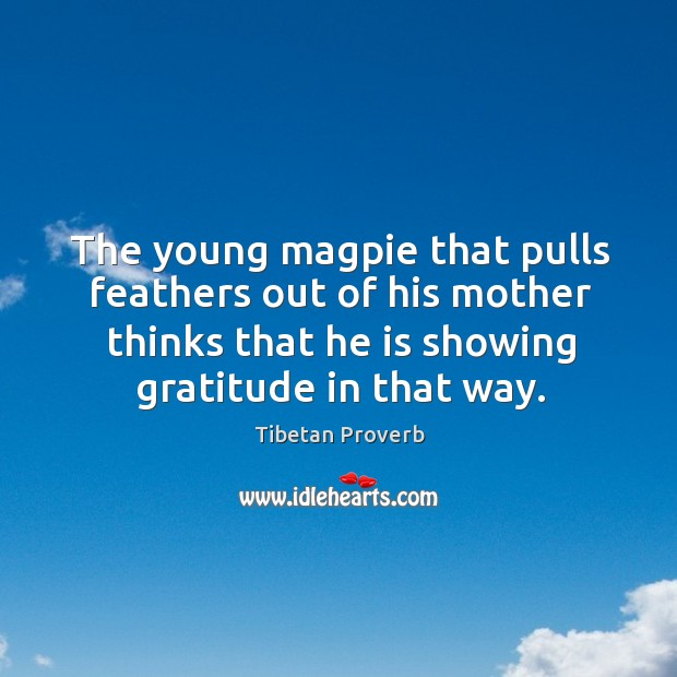 The young magpie that pulls feathers out of his mother thinks that he is showing gratitude in that way. Tibetan Proverbs Image