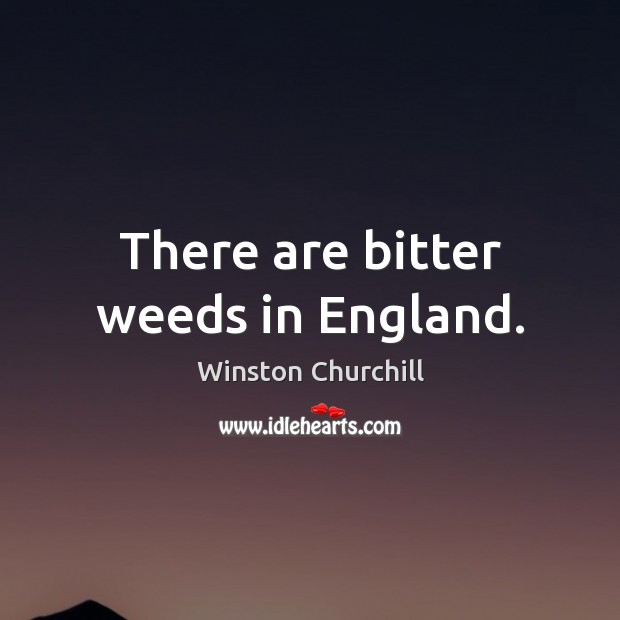 There are bitter weeds in England. Image