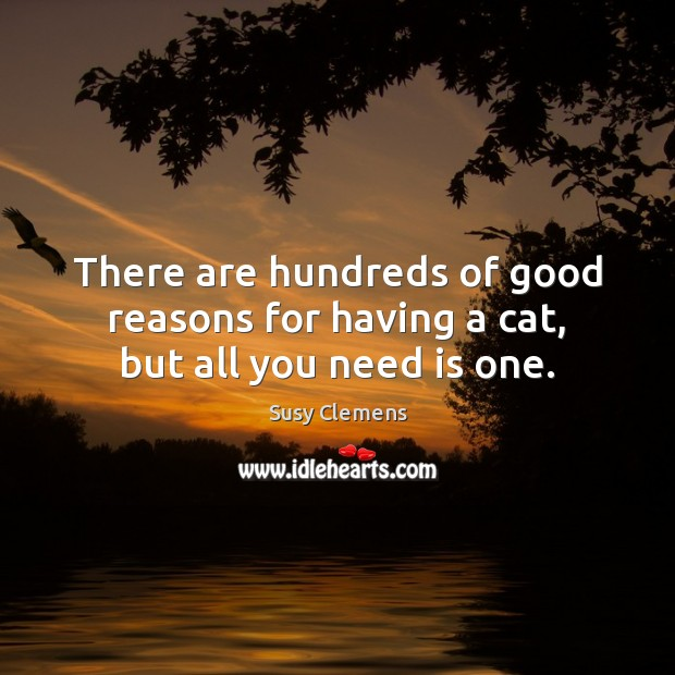 There are hundreds of good reasons for having a cat, but all you need is one. Image