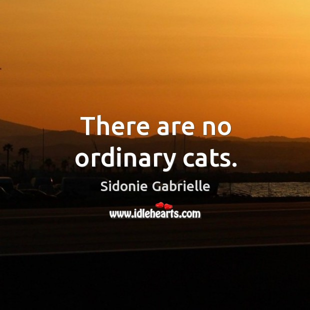 There are no ordinary cats. Image