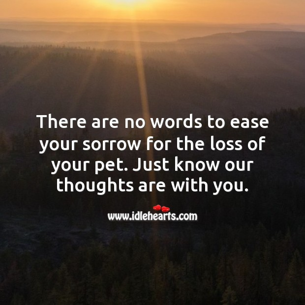 There are no words to ease your sorrow for the loss of your pet. Sympathy Quotes Image