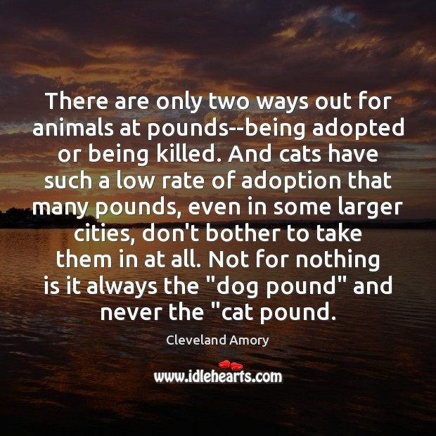 There are only two ways out for animals at pounds–being adopted or Image